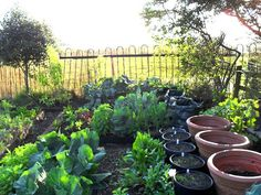 Gardening on Budget - tips on how to save money and increase yields of homegrown veggies #gardening