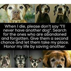 """When I die, please don't say """"I'll never have another dog"""". Search for the ones who are abandoned and forgotten. Give them a second chance and let them take my place. Honor my life by saving another."""