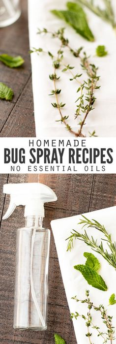 Such a helpful articles with the secret to keeping bugs bugs away naturally with all natural homemade bug spray recipes, made without essential oils! Every recipe can be made with just a few ingredients you have in the kitchen, and they're SO MUCH cheaper than buying it from the store. And safer too since they don't contain DEET! :: DontWastetheCrumb...