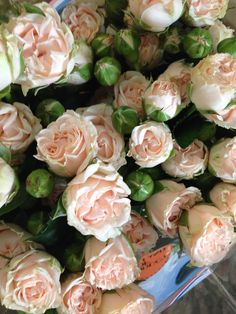 Spray Rose 'Romantic Bubbles'...very soft pink. Sold in bunches of 10 stems from the Flowermonger the wholesale floral home delivery service.