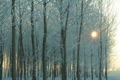 Geometrie invernali (foto di L.Zamprogno), un pioppeto in riva al fiume Po illuminato da un timido sole poco dopo l'alba (www.uomoeterritoriopronatura.it)