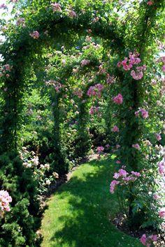 Rose garden~English Gardens~