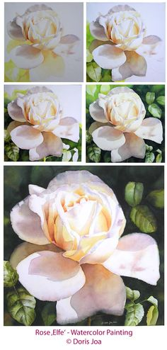Paint a single creamy white rose in watercolor - free art instruction