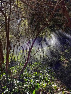 Water Mist in Trees by T. Malachi Dunworth  on 500px