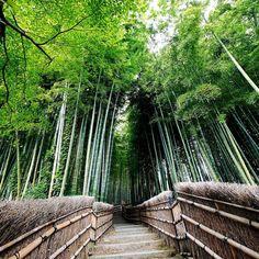 竹林の小径 Kyoto Japan #japan #instagramjapan #loves_nippon #loves_japan #jp_gallery #wu_japan #igers #igersjp #noitenoinstagram #cooljapan #ig_worldclub #team_jp_  #hot_shotz #team_jp_西 #ig_nippon #ig_nihon #worldwide_shot #wow_japan #wow_nihon #photolabo_jp #japanfocus #京都 #bamboo #ig_masterpiece #instagramhub #special_shots #icu_japan #bambooforest #竹林の小径 by biwamori