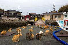 L'isola dei gatti Un esercito di gatti controlla un'isola remota nel sud del Giappone. Si raggomitolano nelle ville abbandonate e si pavoneggiano nel villaggio di pescatori invaso dai felini. All'inizio, furono portati sull'isola di Aoshima per occuparsi dei topi che infestavano le barche dei pescatori. Ma poi si sono moltiplicati e ora oltre 120 esemplari vanno in giro per l'isola, abitata per il resto solo da pochi pensionati intenti a scacciare gli animali.