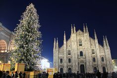 http://www.ireado.com/beautiful-christmast-trees-for-sale/ Beautiful Christmast Trees For Sale : Milan Christmas Tree Christmast Trees For Sale