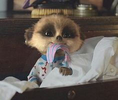 57 Best Baby Oleg the meerkat com images in 2019 | Baby