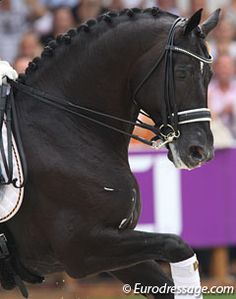 Totilas - wonderful dressage champion!  I hope we will we see him compete again.