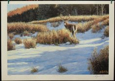 $95.00 Wildlife Animal --Early Winter Buck by Cyril Cox Art Print