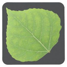 Green Aspen Leaf #11 Square Paper Coaster - spring gifts beautiful diy spring time new year