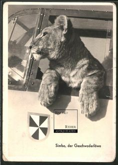 Simba, pet lion of Franz Xaver Baron von Werra, German World War II fighter pilot.
