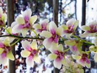 Flores - 70