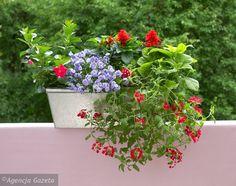 Sezonowe ogródki w skrzynkach balkonowych