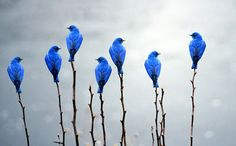 Pretty little blue birds all in a row