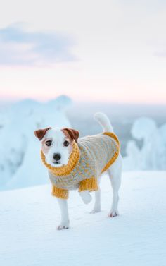 6876269e5f9 Cute Jack russell wearing a winter sweater. Winter Wonderland snowy puppy  dog photography. Pet