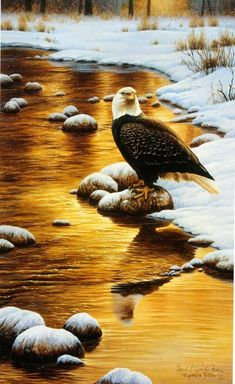 """""""River Watch""""bald eagle12 x 19"""" -""""Birds of All Sizes"""""""