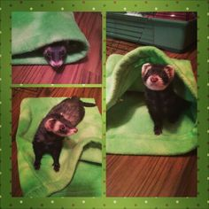 Our JoJo, she is a darling little rescue ferret.