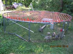 Article: Thinking about Raising Turkeys?  birds corralled in an old trampoline frame.