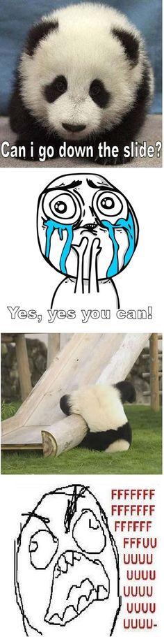 Funny Image of a Bear