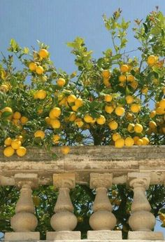 Image shared by Divane. Find images and videos about summer, aesthetic and nature on We Heart It - the app to get lost in what you love. Nature Aesthetic, Summer Aesthetic, Travel Aesthetic, Aesthetic Yellow, Aesthetic Food, Italian Summer, European Summer, Italian Home, Italian Garden