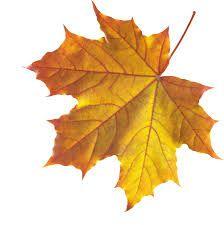 Image result for mohabbatein leaf