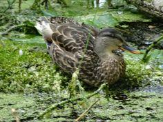 Quack Adventure Tours, Animals, Animaux, Adventure Travel, Animal, Animales, Animais