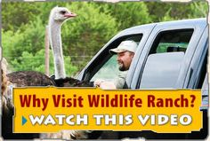 Drive through an amazing safari trip in one of Texas' best cities, San Antonio! An awesome family adventure that's both fun AND educational!  I'm am definitely going to have to go here next time I'm back in San Antonio and take Nathan!