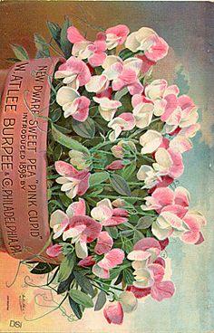 BACK COVER    Company Name:  W. Atlee Burpee & Co.    Catalog Title:  Burpee's Farm Annual (1898)