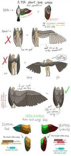 Anatomy of Bird Wings and drawing onto other beings. So Your Angels Have Bird Wings by squidlifecrisis Drawing Techniques, Drawing Tips, Drawing Sketches, Art Drawings, Drawing Stuff, Sketching, Drawing Hair, Drawing Faces, Drawing Ideas