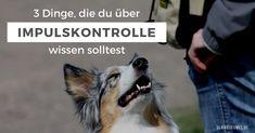 Hier findest du die drei wichtigsten Dinge, die du über Impulskontrolle beim Hund wissen musst und wie du sie pflegen kannst und musst.