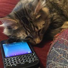 BlackBerry Q10 #PoweredByBlackBerry #XtremeBBerry #BBEliteWin #Luxury #IChooseBlackBerry #LoveBlackBerry #ILoveBB10 #BlackBerryForLife #BB10 #TeamBlackBerry #LuxuryBlackBerry #WeAreBlackBerry  _____________________________  #ReGram @berrycandy1970: Just waiting for the call! #kittensofinstagram #kittens #blackberry #september