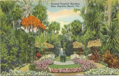 1950s Vintage Postcard - Ormond Tropical Gardens - Daytona Beach Florida Vintage Postcard http://www.amazon.com/dp/B00IO3A0SC/ref=cm_sw_r_pi_dp_2I1Vwb0RGGJCS