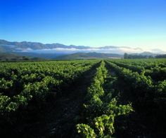 Wines of South Africa - Wineries Stuff To Do, Things To Do, Pretoria, Touring, Wines, Places To Travel, Places Ive Been, South Africa, The Good Place