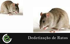 Problemas com ratos? Aqui você encontra dedetização de ratos, realizamos a exterminação de forma eficiente e agil, acesse e confira agora mesmo.