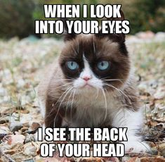 Find the fresh grumpy cat funny animal memes hilarious pets pictures Grumpy Cat Quotes, Funny Grumpy Cat Memes, Cat Jokes, Funny Cats, Funny Memes, Hilarious, Funny Minion, Cute Animal Memes, Animal Jokes