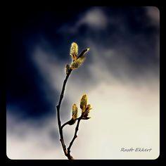 Výtvarné foto Photo And Video, Beauty, Camera, Beauty Illustration