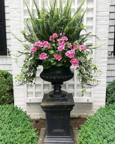 Pretty Front Door Flower Pots For A Good First Impression Pink geraniums update the big urn for the rest of the summer!Pink geraniums update the big urn for the rest of the summer! Porch Urns, Unique Garden, Pink Geranium, Urn Planters, Planter Ideas, Geranium Planters, Potted Plants Patio, Perennial Geranium, Front Porch Planters