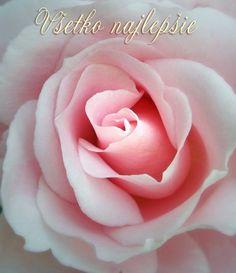 Pohľadnica všetko najlepšie k narodeninám meninám ruza  - k meninám, príležitosti Mary Kay, Simply Beautiful, Pink Roses, Congratulations, Amazing, Floral, Flowers, Plants, Gifts