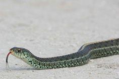 ??? think its a garter snake