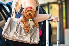 Tips for #Traveling with Your #Pets