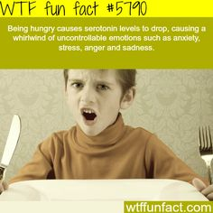 WTF Facts : funny, interesting & weird facts — Hunger causes anger - WTF fun facts Wow Facts, Wtf Fun Facts, True Facts, Funny Facts, Random Facts, Strange Facts, Crazy Facts, The More You Know, Good To Know