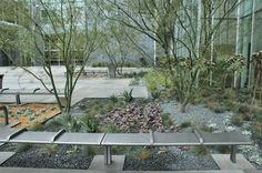 Grey rock around palo verde tree. Valley Performing Arts Center
