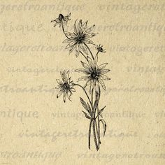 Digital Wild Flowers Graphic Download Wildflower Illustration Image Printable Vintage Clip Art. High quality digital image download for fabric transfers, making prints, t-shirts, and other great uses. Real vintage clip art. Personal or commercial use. This graphic is high quality, high resolution at 8½ x 11 inches. Transparent background PNG version included.