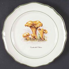 Sdq1 Salad Plate by St Amand | Replacements, Ltd. Pattern Code, Mushroom Art, Solid Background, China Dinnerware, Salad Plates, How To Take Photos, Stuffed Mushrooms, Tableware, Stuff Mushrooms