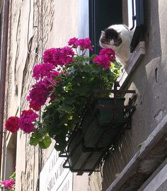 cybergata: Kitty eating flowers in Venice, Italy.