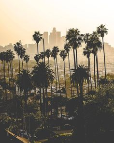 Los Angeles, California by Beautiful World, Beautiful Places, San Diego, Wanderlust, City Of Angels, California Dreamin', Roadtrip, Vacation Spots, Palm Trees