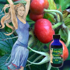 Certified Organic Cold-Pressed Rosehip Oil Regenerative rosehip oil is extremely beneficial for the skin. Cools redness and hydrates all skin types. Apply directly to the skin or add to your bespoke blend. Cold Pressed Rosehip Oil, Organic Rosehip Oil, Blue Bottle, Massage Oil, Aromatherapy, Sensitive Skin, Essential Oils, Fragrance, How To Apply