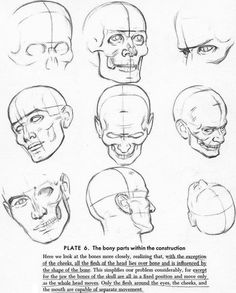 anatomy references drawing - Buscar con Google