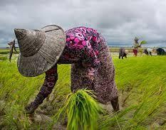 Myanmar | Insolit vi